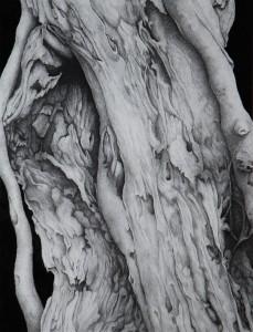 Déchirure - 49 x 65ht - Dessin encre de Chine
