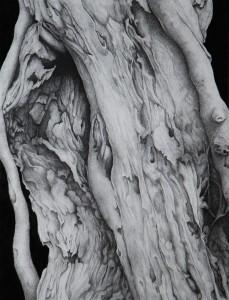 Déchirure - 49 x 65ht- Dessin encre de Chine (encadré 69 x 85)