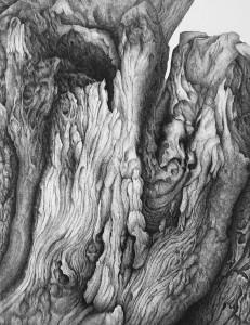 L'olivier des Baux de Provence - Dessin encre de Chine - 45 x 59ht - (encadré 60 x 80ht)